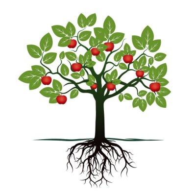 Adesivo Giovane albero con verde Leafs, radici e mele rosse. illustrazione vettoriale