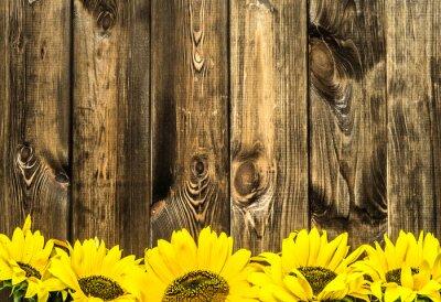 Adesivo Girasoli su vecchie tavole di legno. Fiorisce la priorità bassa con lo spazio della copia