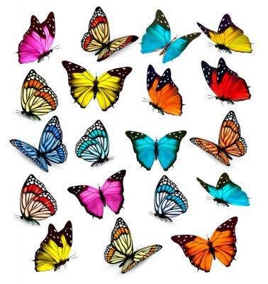 Adesivo Grande collezione di farfalle colorate. Vettore