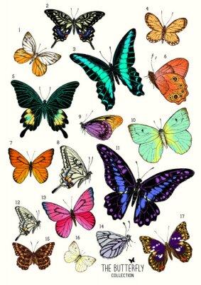 Adesivo Grande collezione di farfalle, set disegnata a mano isolated.Vector illustrazione
