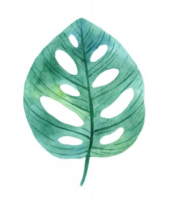 Adesivo Green leaves of monstera from humid rainforest.