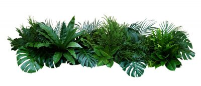 Adesivo Green leaves of tropical plants bush (Monstera, palm, rubber plant, pine, bird's nest fern) floral arrangement indoors garden nature backdrop isolated on white background, clipping path included.