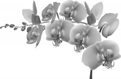 Adesivo grey orchid branch on white background
