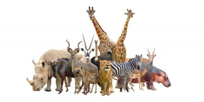 Adesivo gruppo di animali africa