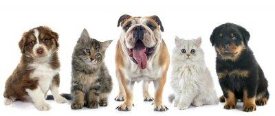 Adesivo gruppo di animali da compagnia