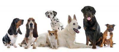 Adesivo gruppo di cani