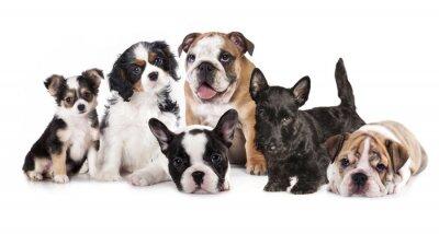 Adesivo Gruppo di cuccioli seduto di fronte a uno sfondo bianco