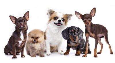 Adesivo gruppo di piccoli compagni di cani decorativi