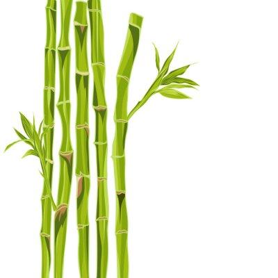 Adesivo Hand-drawn bacground bambù verde con spazio per il testo