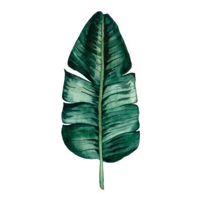 Adesivo Hand drawn watercolor tropical plants set. Exotic palm leaves, jungle tree, brazil tropic botany elements.