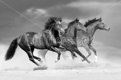 Adesivo Horse herd run in dust