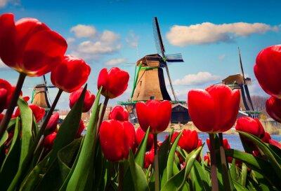Adesivo I famosi mulini a vento olandesi