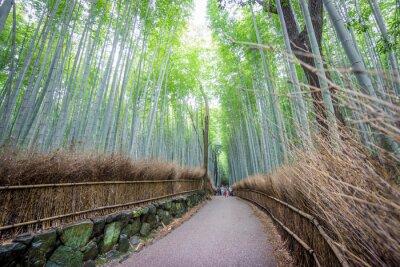 Adesivo Il Arashiyama Bamboo Grove di Kyoto, in Giappone.