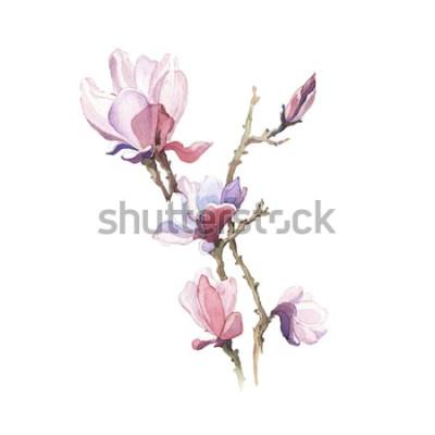 Adesivo Il fiore dell'acquerello della magnolia della molla isolato sui precedenti bianchi