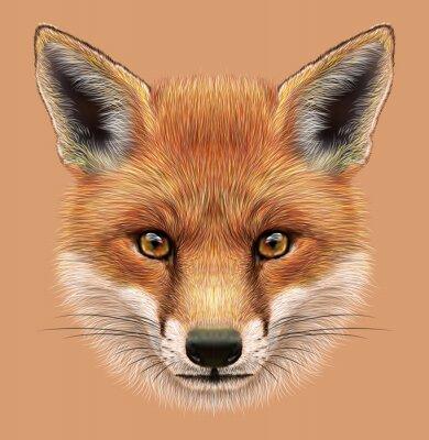Adesivo Illustrativa Ritratto di una volpe rossa. Il volto soffice carino di foresta Fox.