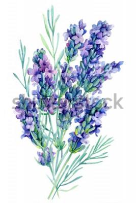 Adesivo illustrazione dell'acquerello dei fiori della lavanda del mazzo dell'acquerello su fondo bianco isolato