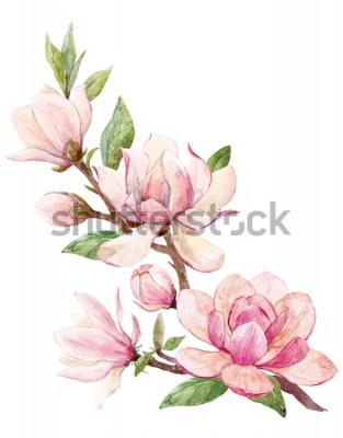 Adesivo Illustrazione dell'acquerello di un ramo con la carta rosa della molla del fiore della magnolia dei fiori