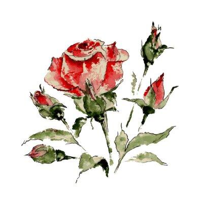 Adesivo Illustrazione di rosa rossa
