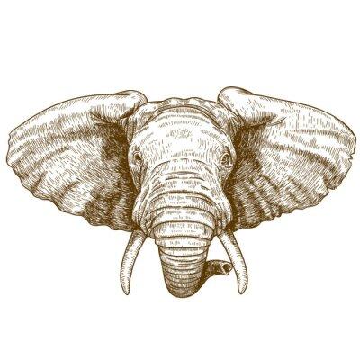 Adesivo illustrazione vettoriale di testa di elefante incisione