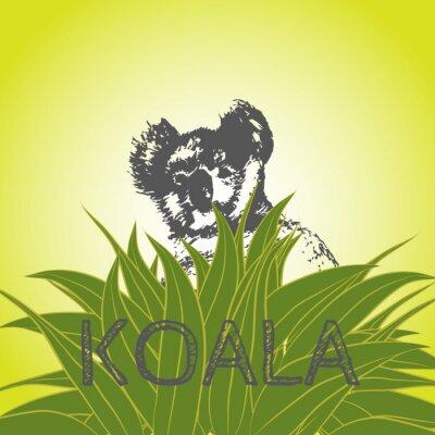 Adesivo illustrazione vettoriale di un koala in foglie di eucalipto. Koala. albero di eucalipto.