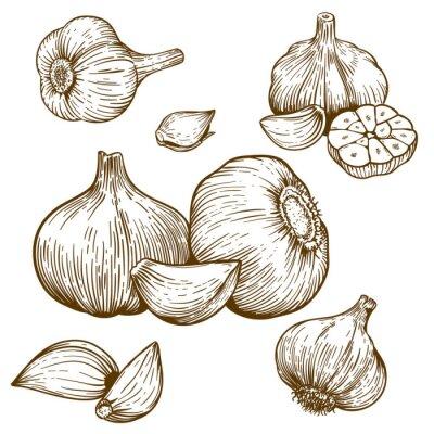 Adesivo incisione illustrazione di aglio