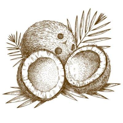 Adesivo incisione illustrazione di cocco e foglia di palma