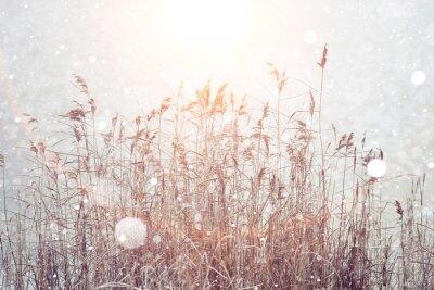 Adesivo inverno sfondo sfocato, fiocchi di neve erba secca