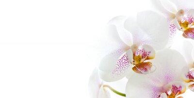 Adesivo isolati fiori di orchidea