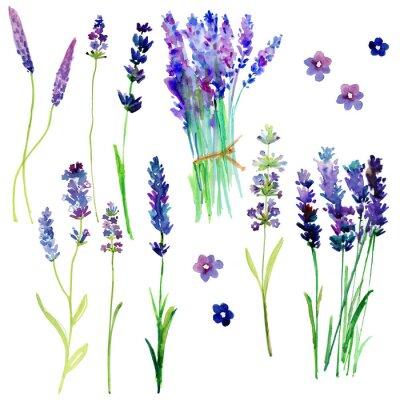 Adesivo Isolati Provence fiori di lavanda. Acquerello floreale impostato per il vostro disegno.