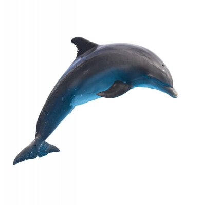 Adesivo jumping dolphin on white