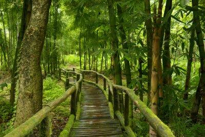 Adesivo Jungla de Tailandia con puente de madera