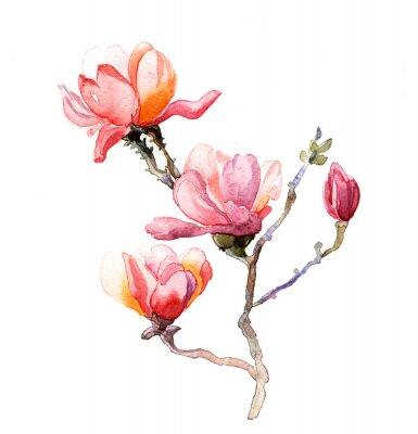 Adesivo l'acquarello magnolia isolato su sfondo bianco