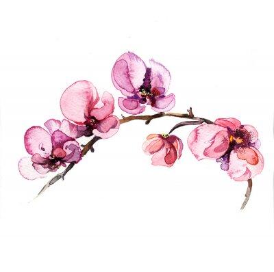 Adesivo l'orchidea fiori acquerello isolato su sfondo bianco