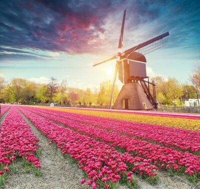 Adesivo La strada che porta ai mulini a vento olandesi dal canale di Rotterdam. Olanda. Olanda