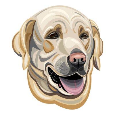 Adesivo Labrador