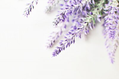 Adesivo Lavender branch on a white background