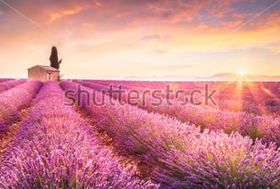 Adesivo Lavender fields at sunrise near Valensole, Provence, France