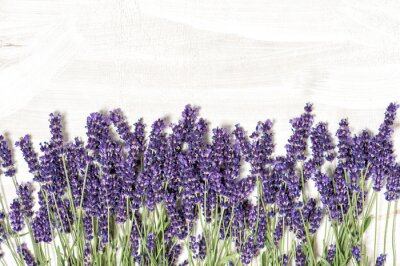 Adesivo Lavender flowers over white wooden texture background