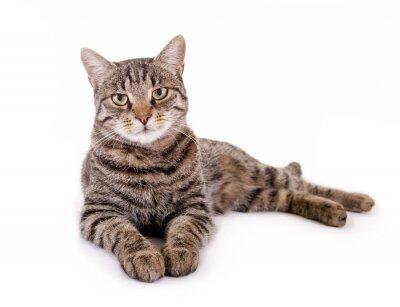 Adesivo Liegende, getigerte gatto