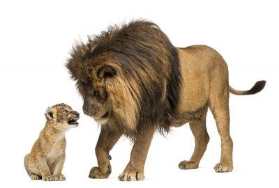 Adesivo Lion in piedi e guardando un cucciolo di leone