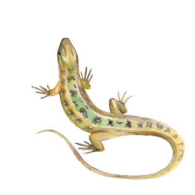 Adesivo Lizard. Acquerello illustrazione nel vettore