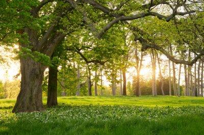 Adesivo Luce del sole nella foresta verde primavera