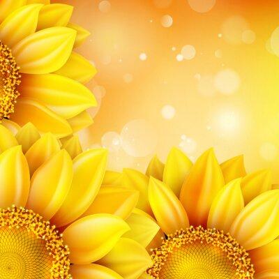 Adesivo Macro Sunflower background. EPS 10
