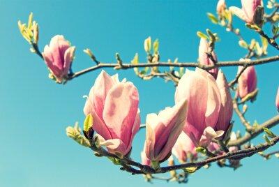 Adesivo Magnolia