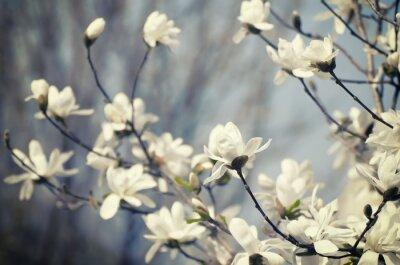 Adesivo Magnolia fiori
