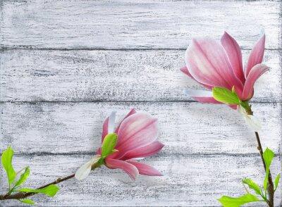 Adesivo Magnolia fiori su sfondo di tavole di legno shabby