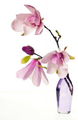 Adesivo Magnolia Jane Blossoms