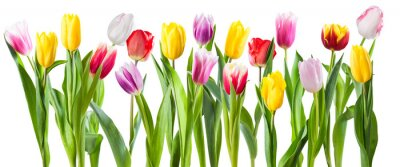 Adesivo Many different tulip flowers isolated