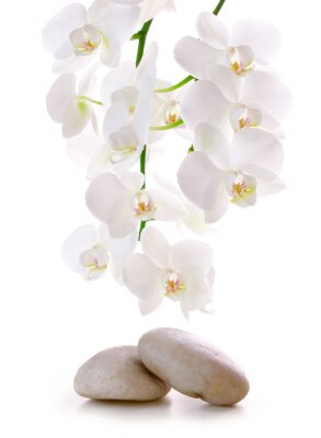 Adesivo Massage Stones with Orchid.