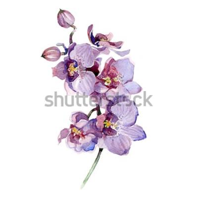Adesivo Mazzo dell'orchidea dell'acquerello isolato su fondo bianco.